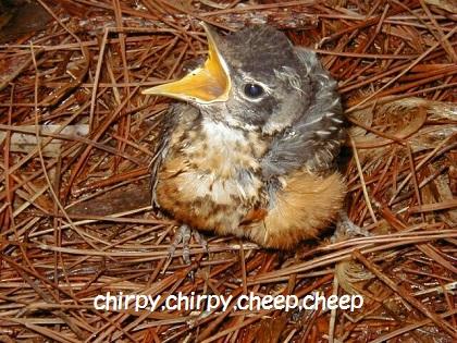 chirpy,chirpy,cheep,cheep