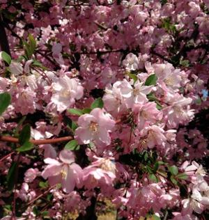 桜以外にも