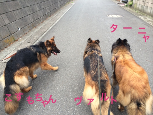 fc2blog_20140625192607dfc.jpg