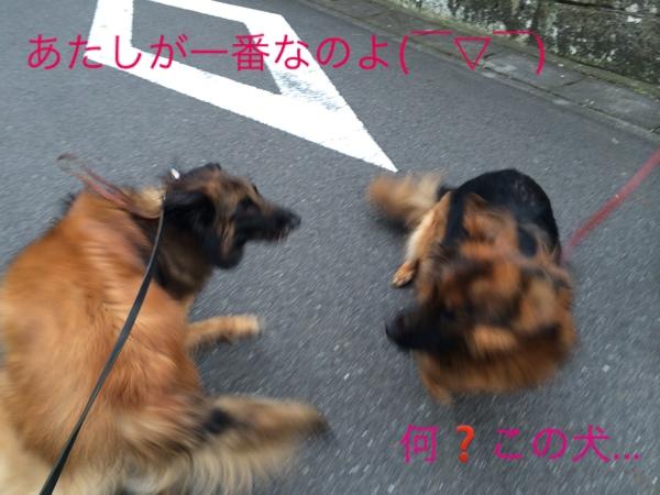 fc2blog_20140625193002a54.jpg