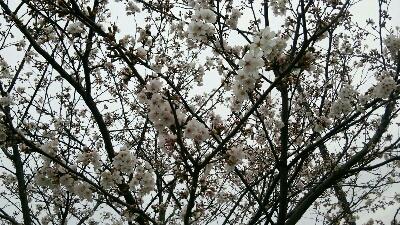 fc2_2014-03-30_04-12-49-102.jpg