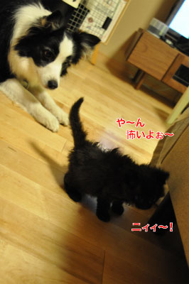 20140614cat03.jpg
