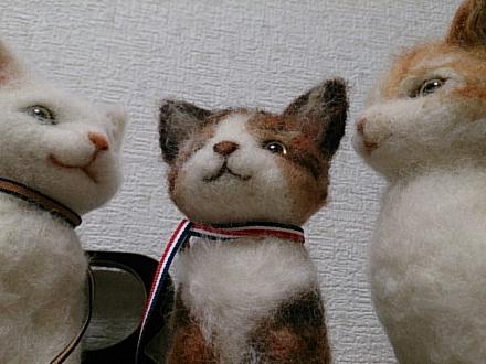 羊毛猫201406230001