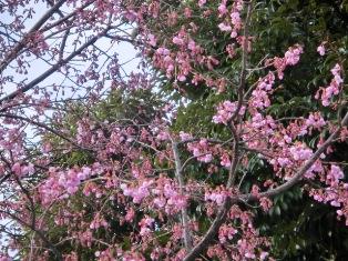 種類はわからないですが、濃いピンクの花
