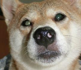 鼻が^m^