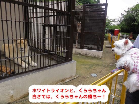 DSC08021.jpg