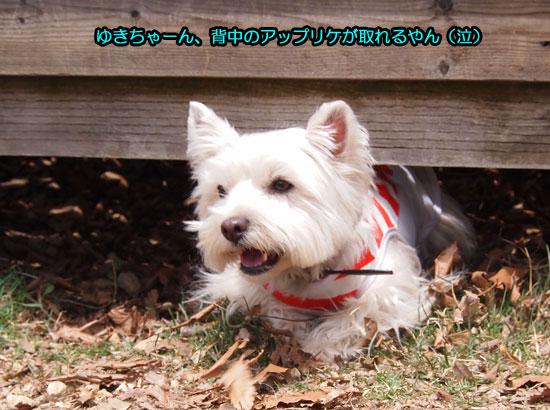 P5047571.jpg