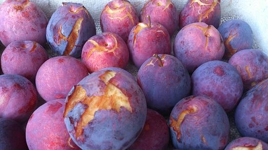 雨に打たれ、割れてしまった果実