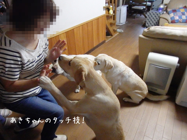 aki_2014090501092567d.jpg