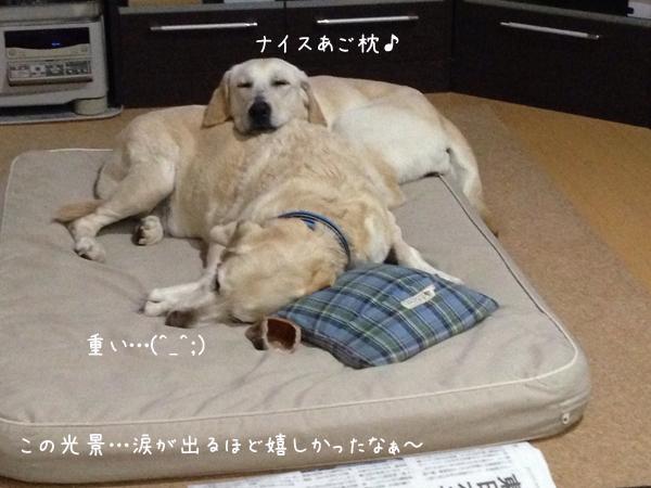 bed1_20140310021150159.jpg