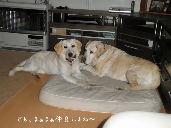bed1_201403292343198f8.jpg