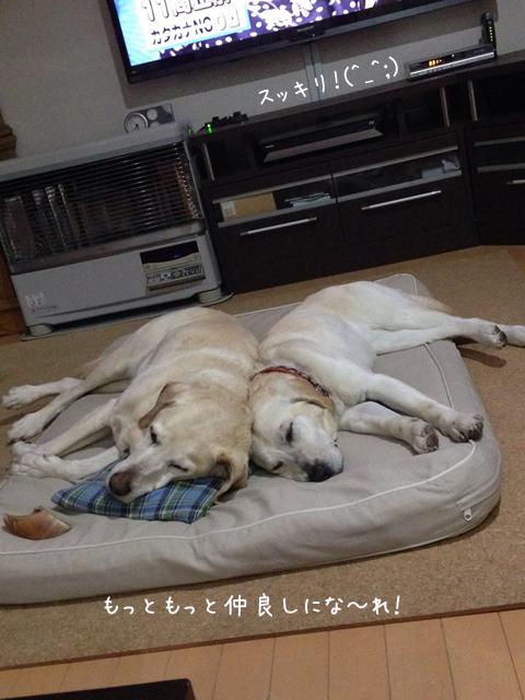 bed2_201403100211528ef.jpg