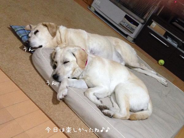 bed_20140320224031536.jpg