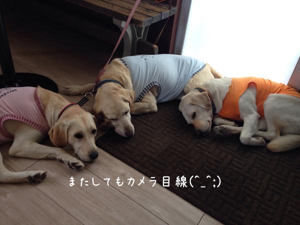 cafe_2014060614191898b.jpg