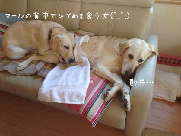 erihidume_20140627000614845.jpg