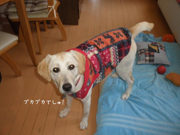 huku1_20140318014224599.jpg