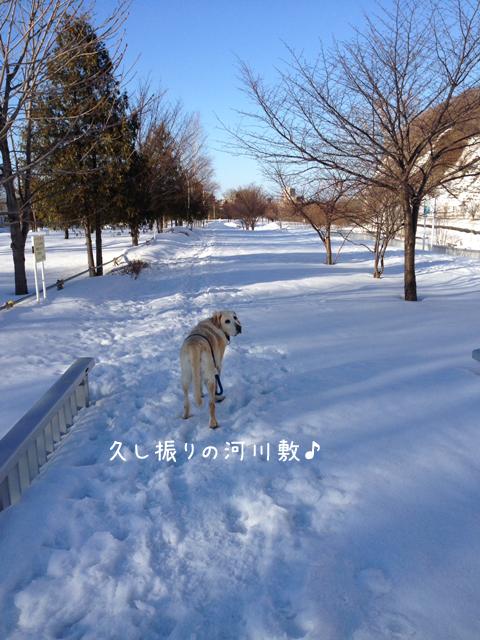 kasenziki_20140319210414ded.jpg