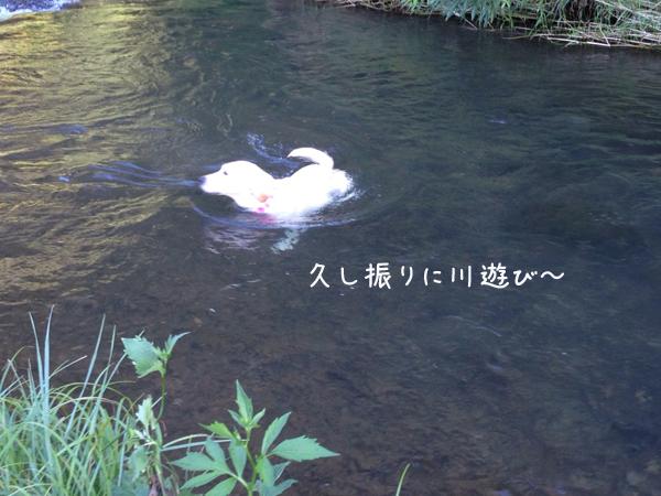 kawa1_20140829210536d87.jpg