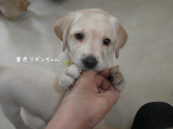 kiiro_2014051221344794c.jpg