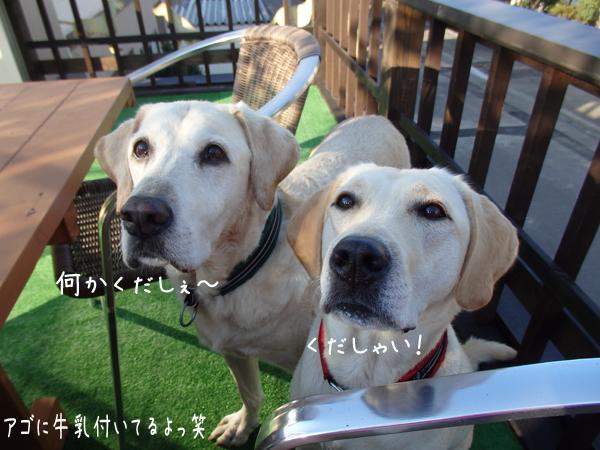kudasai_201409012104355d9.jpg