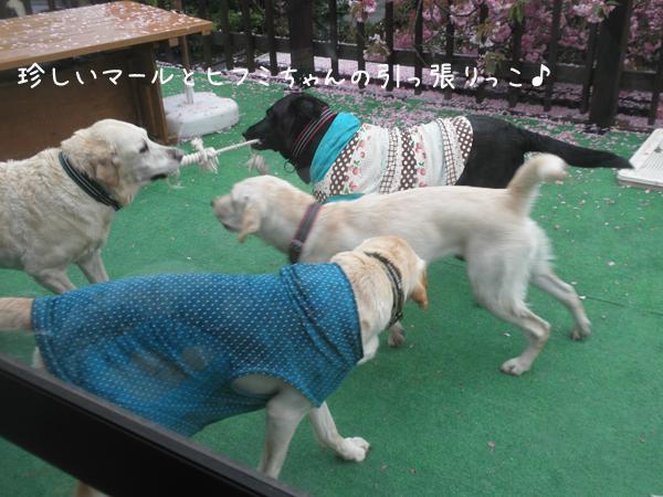 maruhihumi_2014051721413152e.jpg