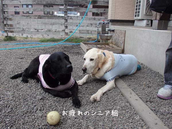 maruhihumi_20140814163820cb8.jpg