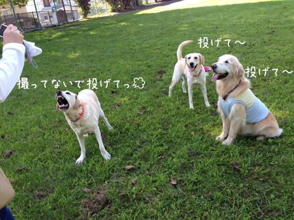 maruhoeru_20140829210544205.jpg