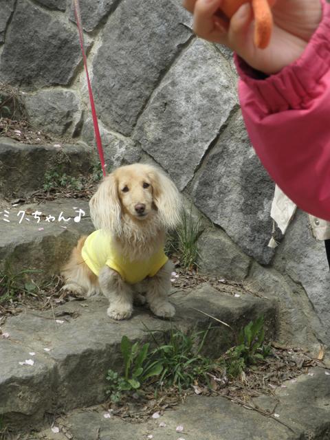 miku_20140505220743045.jpg
