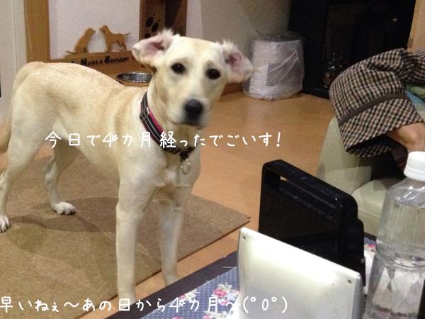 mimi_2014061722021021f.jpg