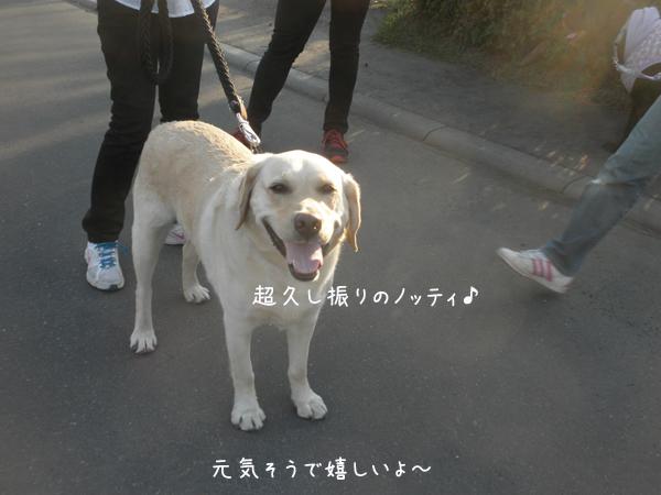 notei_2014042601072231d.jpg