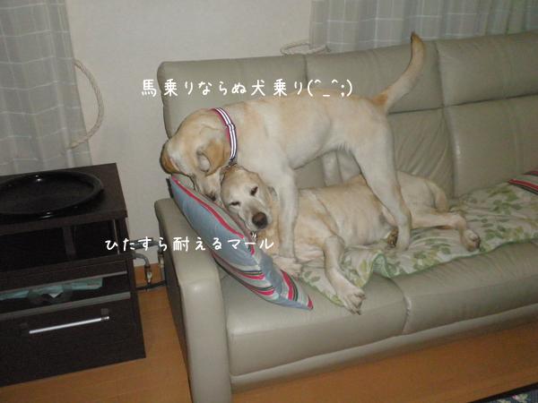 sofa1_20140402235504aed.jpg