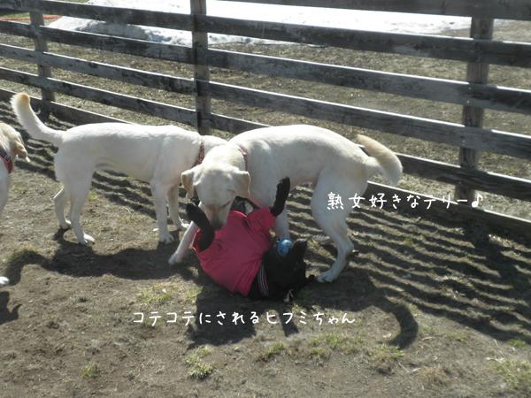 terihihumi_201404210212177eb.jpg