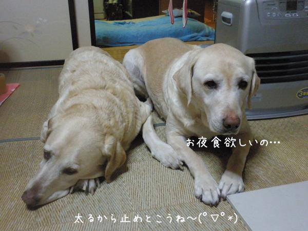 wasitu_20140320215143e1a.jpg