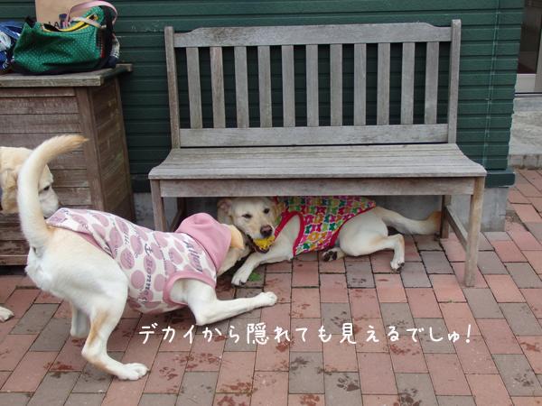 yawarakakureru.jpg