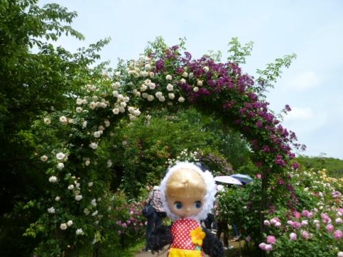 京成バラ園♪