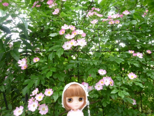 The Natural Gardens of Sakano♪