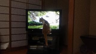 ぴっち家来TV観賞