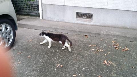 あっ、ご近所猫しゃん