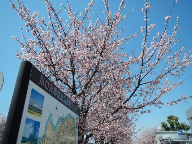 元郷桜3-23 (1)