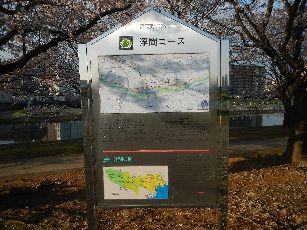 通勤路 桜4-1 (7)