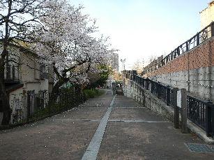 通勤路 桜4-2 (12)
