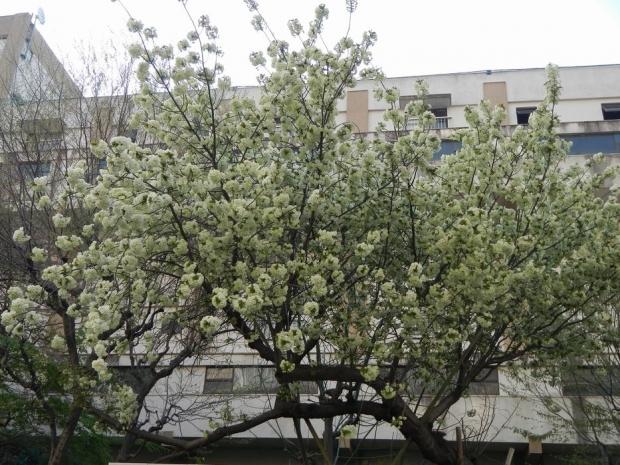 4-10桜 (3)