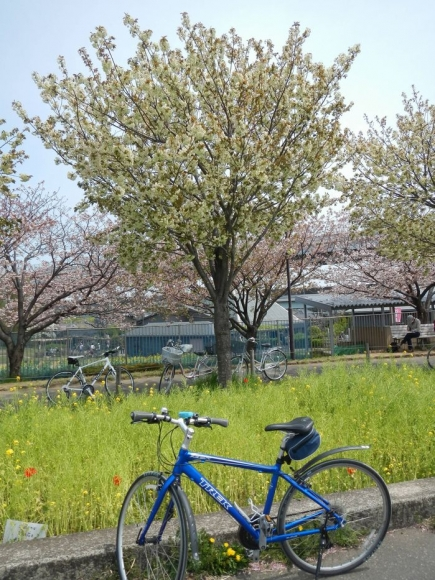 サイクリング4-13 (11)