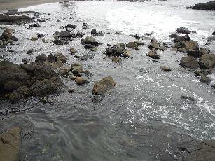 今井浜海岸 (8)