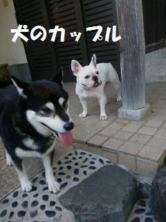 DSC_1929-a_convert_20140730110450.jpg