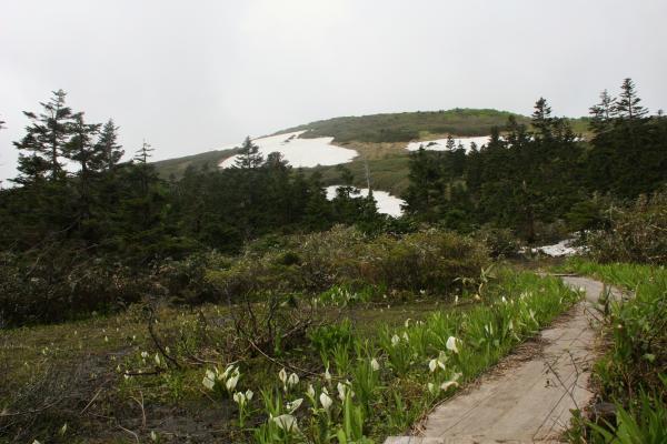 山人湿原2