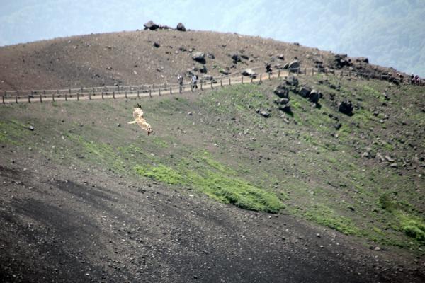 横岳稜線2