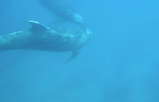 u-dolphin.jpg