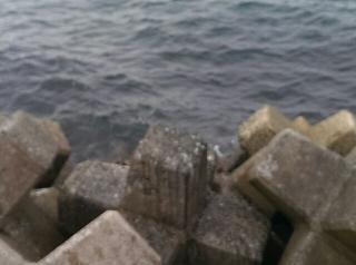 新波止 釣り場