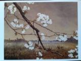 墨水桜花輝耀の景